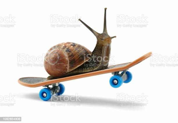 Snail riding a skateboard picture id1092854906?b=1&k=6&m=1092854906&s=612x612&h=awwpzhryu0abtlfw3hsee2olysbyila8mprsnko4ic8=
