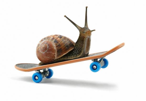 snail riding a skateboard - ślimak gastropoda zdjęcia i obrazy z banku zdjęć