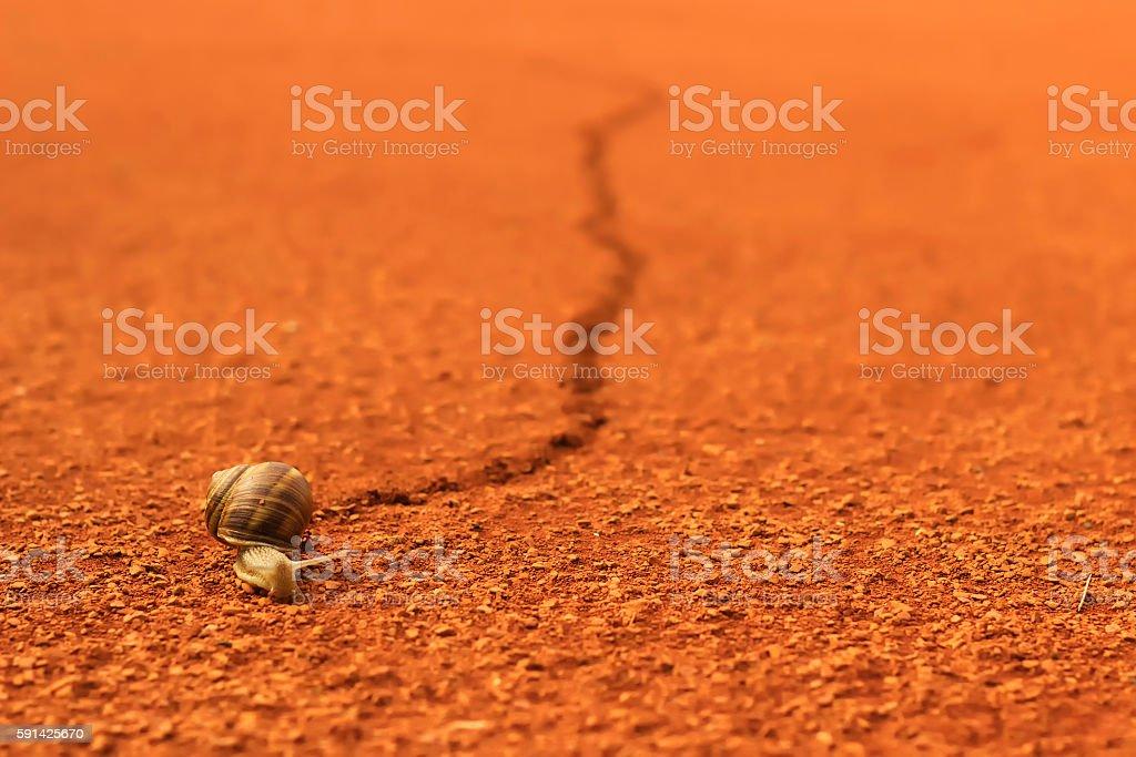 Snail running across tennis court stock photo