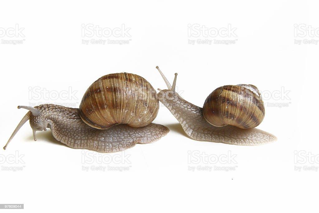 Snail series royalty-free stock photo