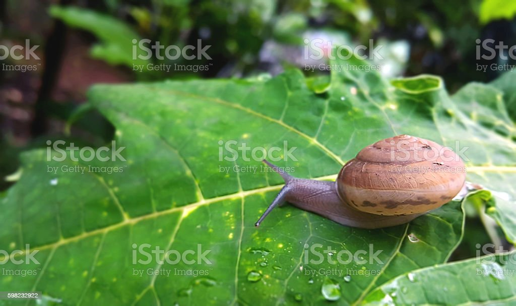 snail shell in nature background foto royalty-free