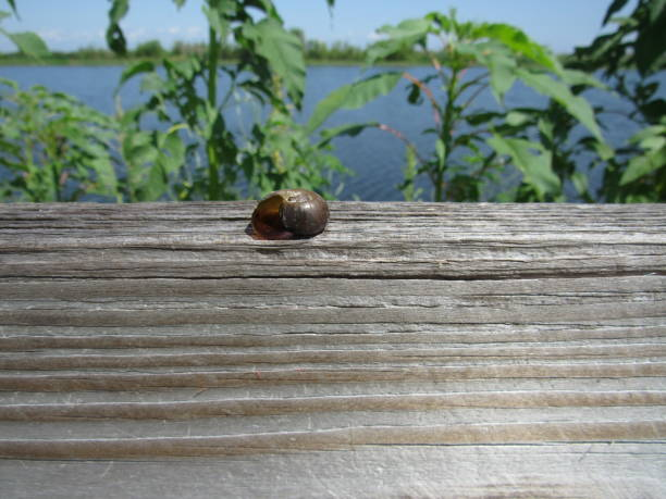 snail shell - dianna dann narciso stock pictures, royalty-free photos & images