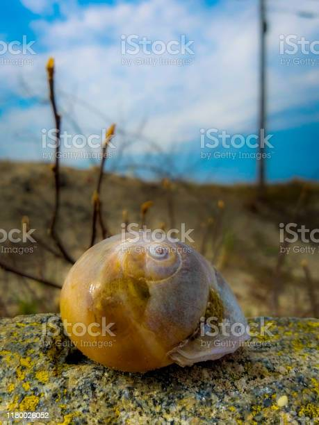 Photo of Snail shell