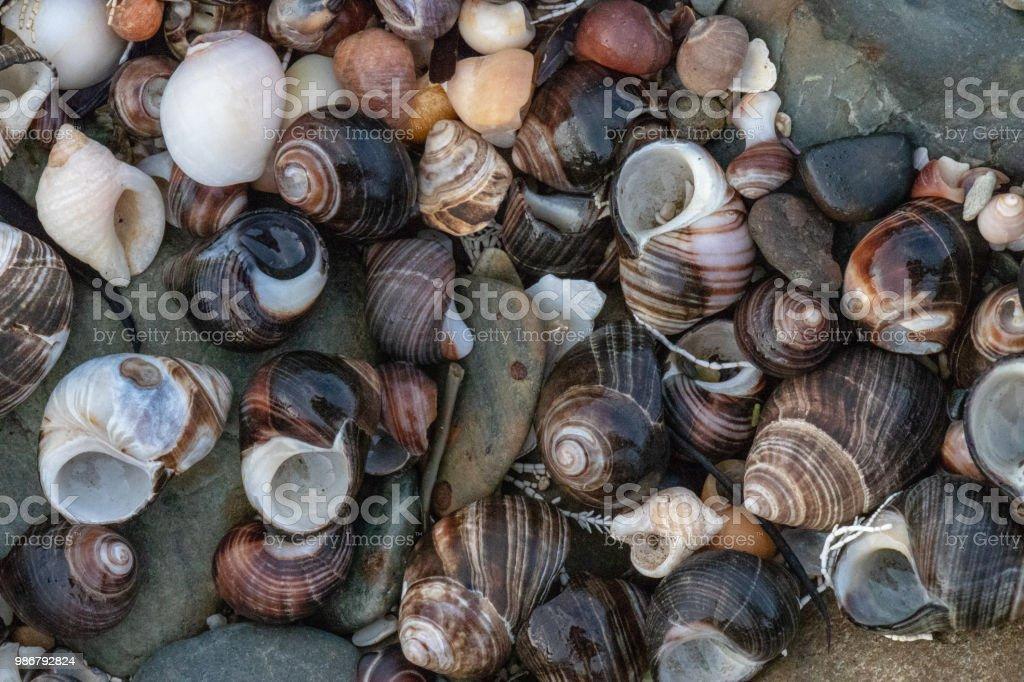 Snail Shells & Beach Pebbles stock photo