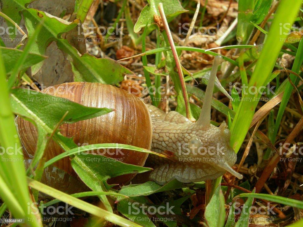 Ślimak pokaż rogi