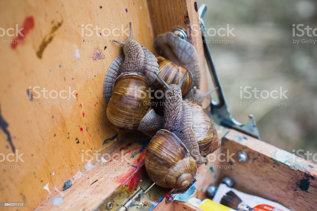 Snail slides on a wooden surface. Animal. Invertebrates crawling. Shellfish, Gastropoda. The symbol of eternity and fertility in Egypt. Gastropod mollusk with a spiral shell. Spiral sink 免版稅 stock photo