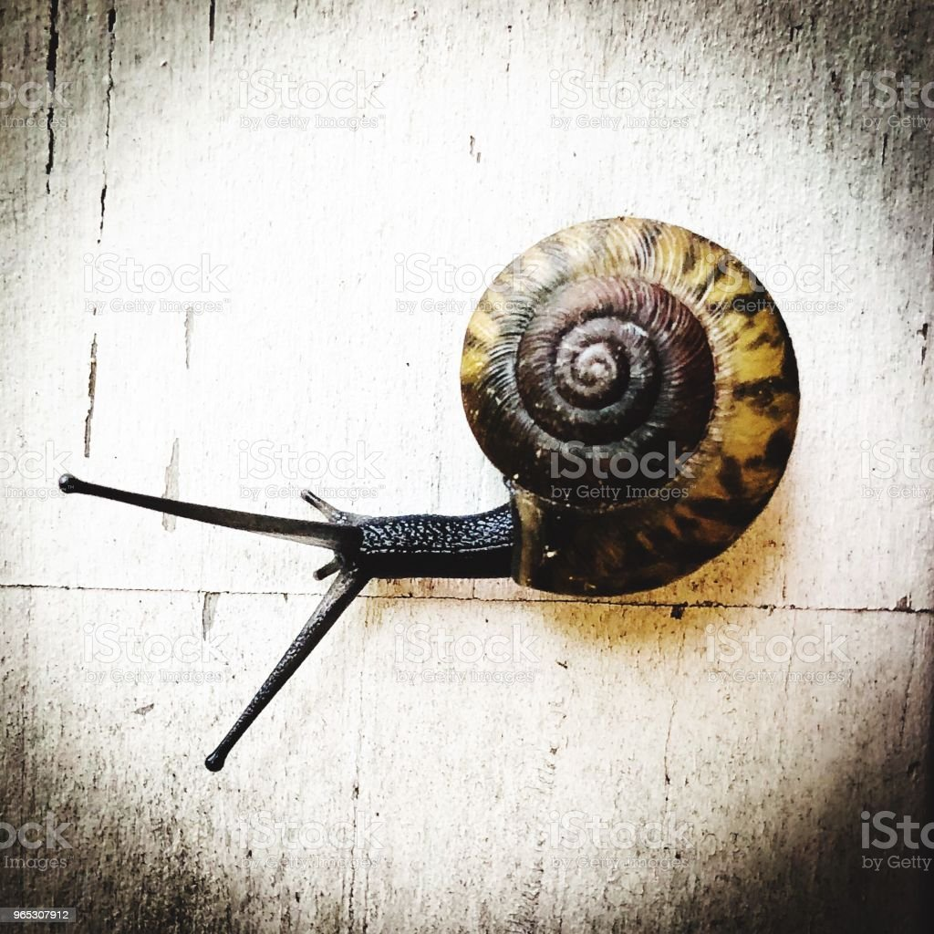 Snail Spiral royalty-free stock photo