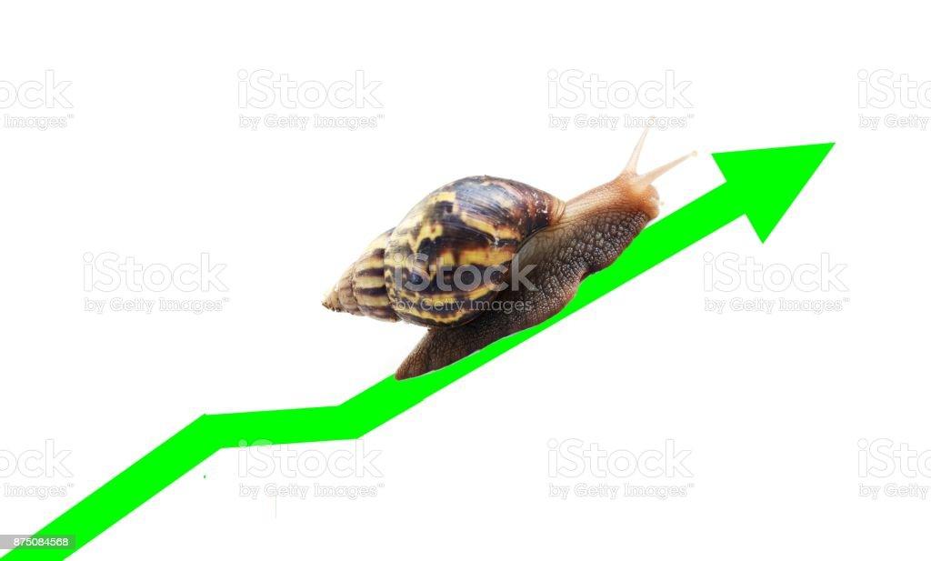 Snail travel along the green arrow line stock photo
