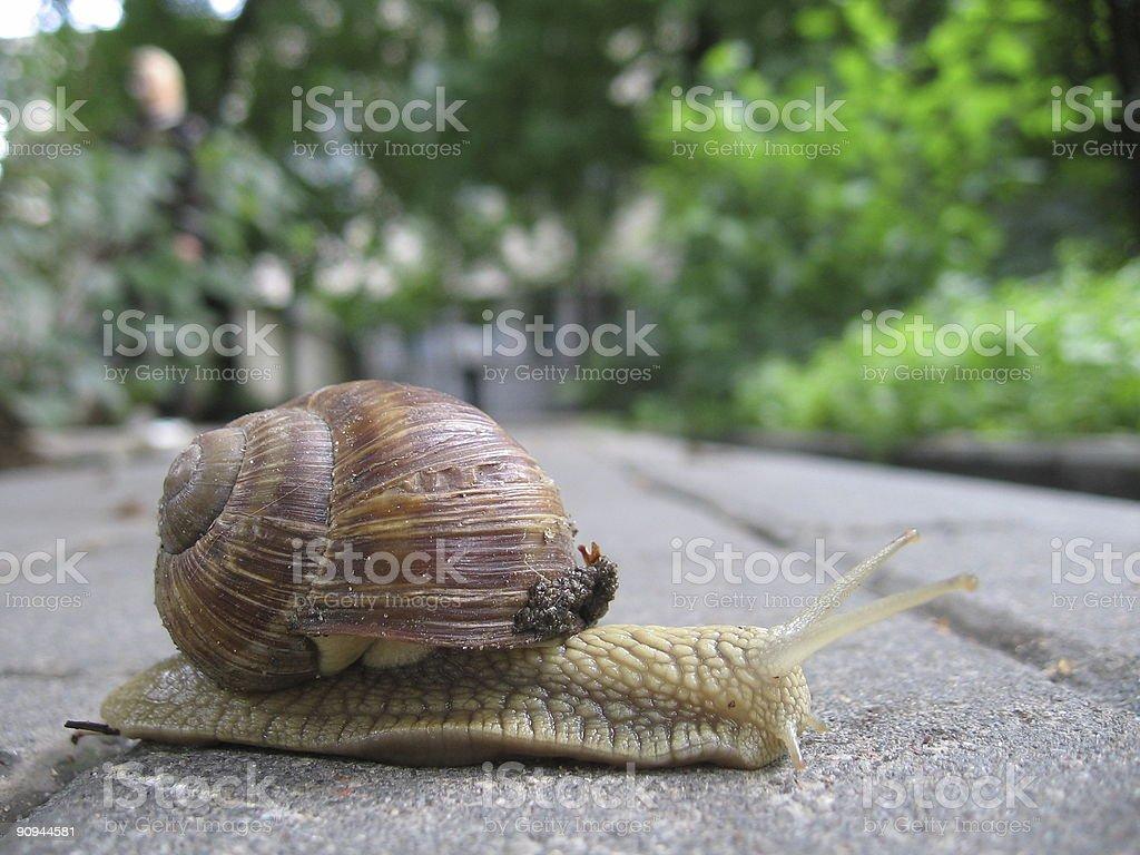 Snail trip stock photo