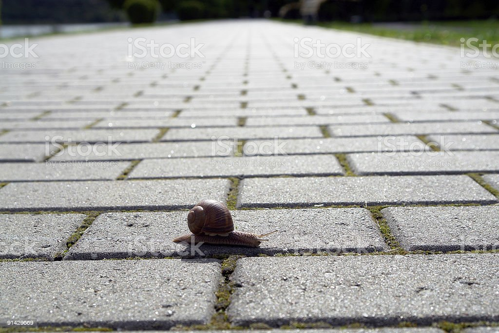 snail walking royalty-free stock photo