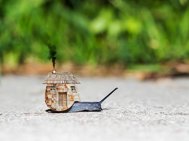 weinbergschnecke mit house - dachschräge einrichten stock-fotos und bilder