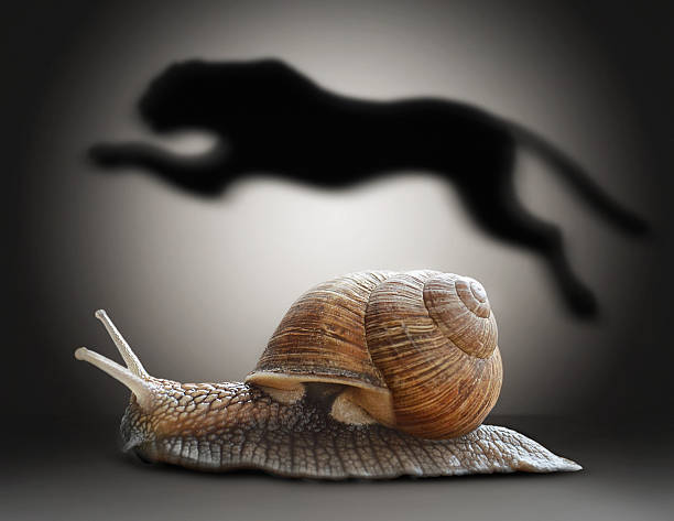 snail with cheetah shadow. concept graphic in soft vintage style - langzaam stockfoto's en -beelden