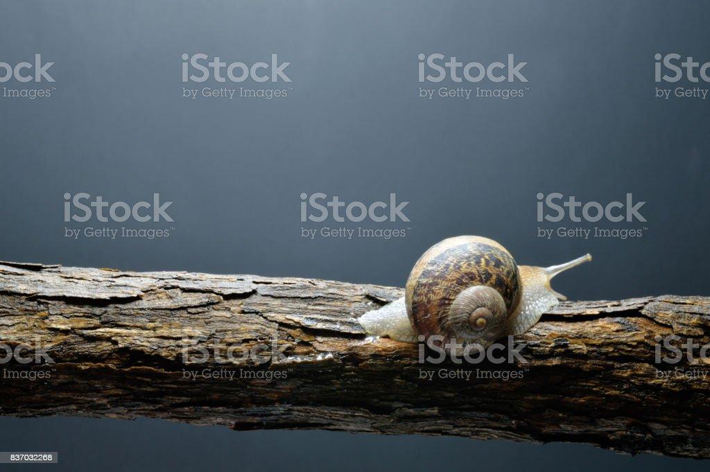 snail with dark background stock photo