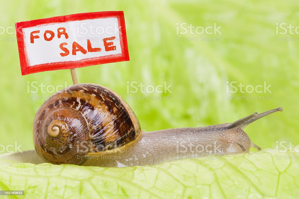 Snail With For Sale Sign royalty-free stock photo