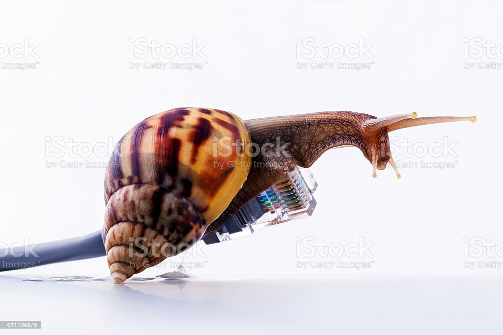 Snail with rj45 connector symbolic photo for slow internet conne stock photo