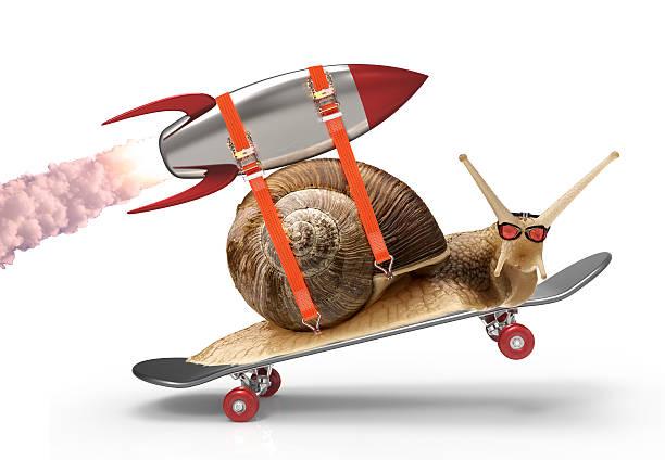 ślimak z prędkości - ślimak gastropoda zdjęcia i obrazy z banku zdjęć