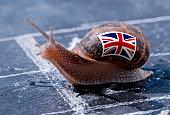 Escargot avec les couleurs du drapeau de l'Angleterre