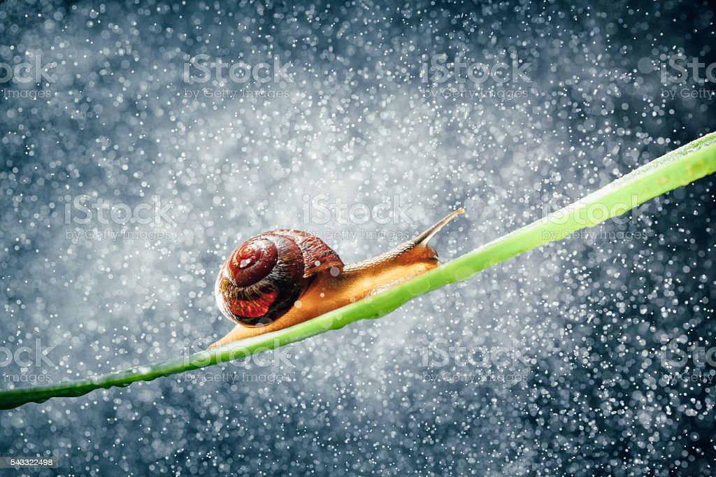 snail with water particles bokeh as the background stock photo