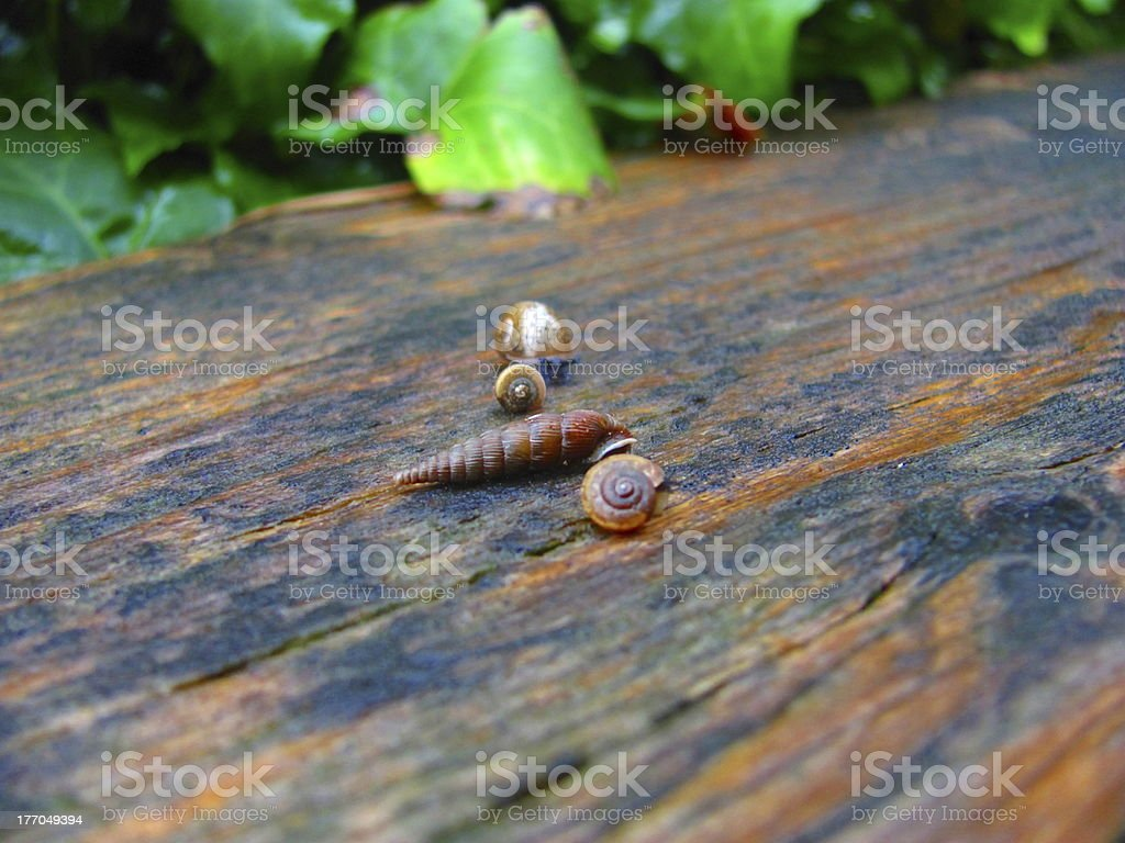 Snails After Rain Macro View royalty-free stock photo