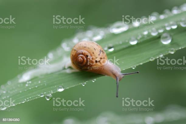 Snails crawling onto the grass picture id831364050?b=1&k=6&m=831364050&s=612x612&h=r lw kjxysv1phrzk36gua9jefvaunjuvgky zsqpay=