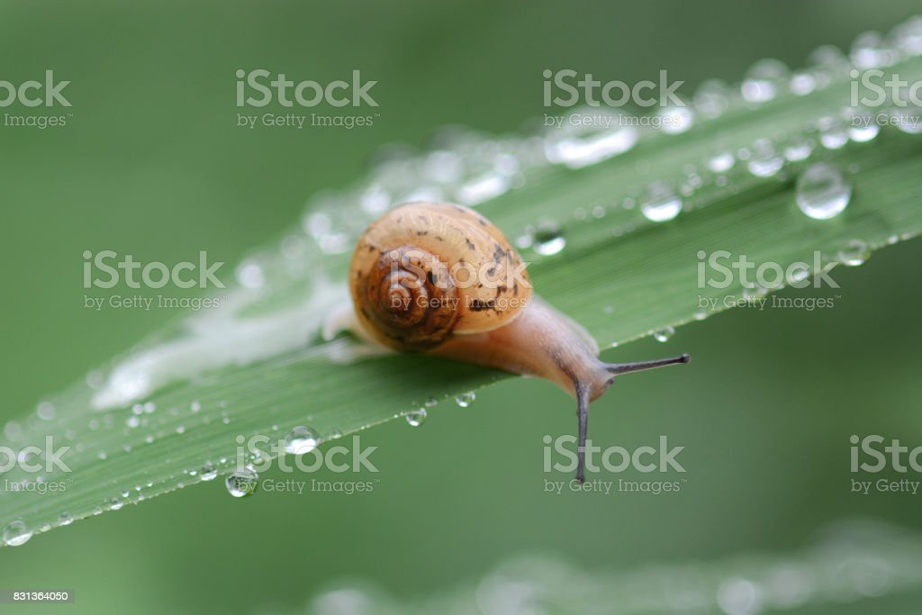 Snails crawling onto the grass stock photo
