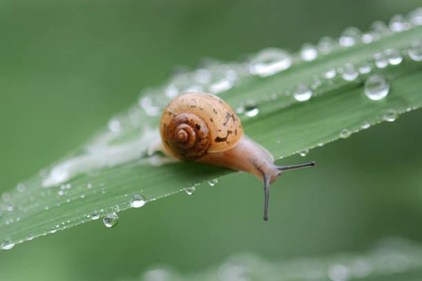 snails crawling onto the grass - ślimak gastropoda zdjęcia i obrazy z banku zdjęć