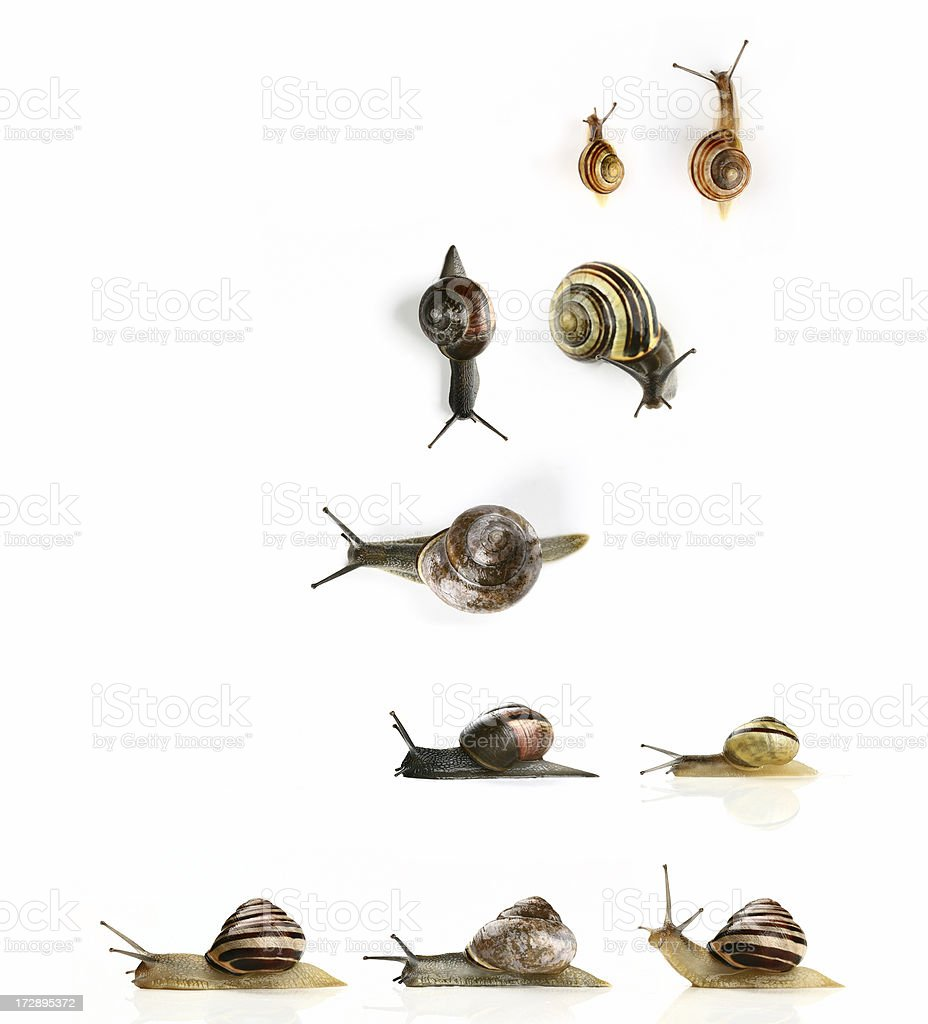snails from garden royalty-free stock photo