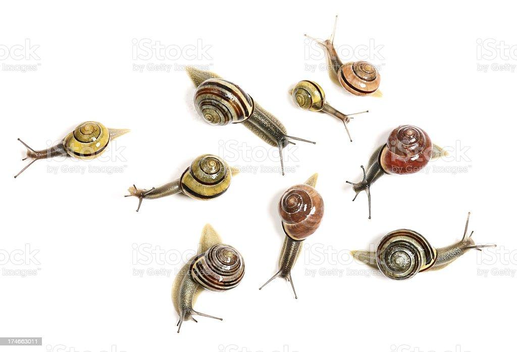 snails from garden stock photo