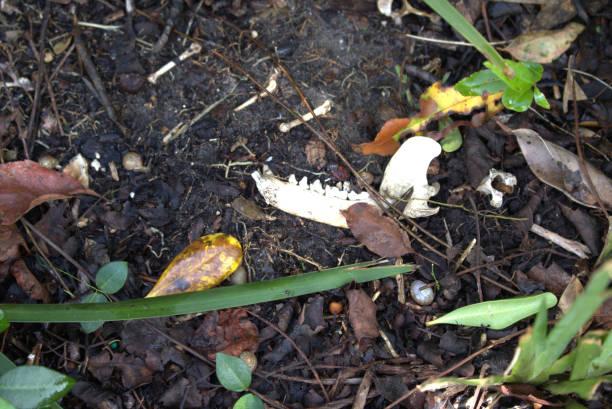 Snails, jawbone of an animal, weeds, sunshine stock photo