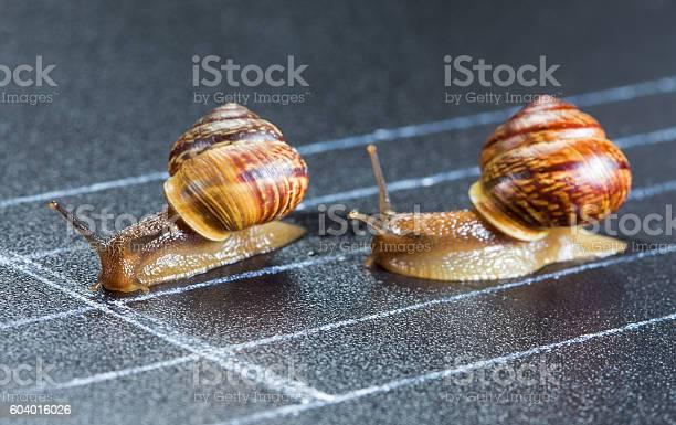 Snails on the athletic track picture id604016026?b=1&k=6&m=604016026&s=612x612&h=0yphmppmqtm7uvimt4pvhdeemqenow7calxjzcscuxw=