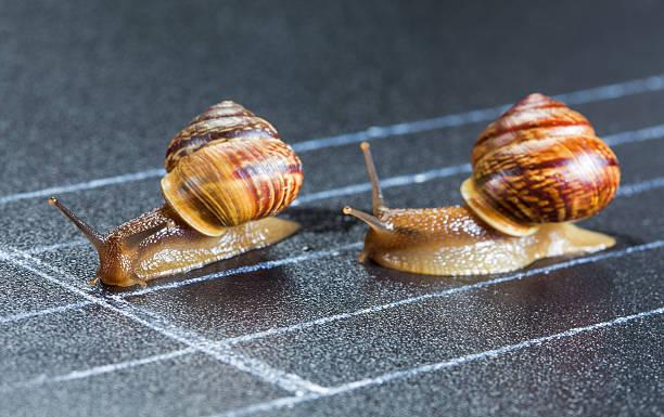 snails on the athletic track - ślimak gastropoda zdjęcia i obrazy z banku zdjęć