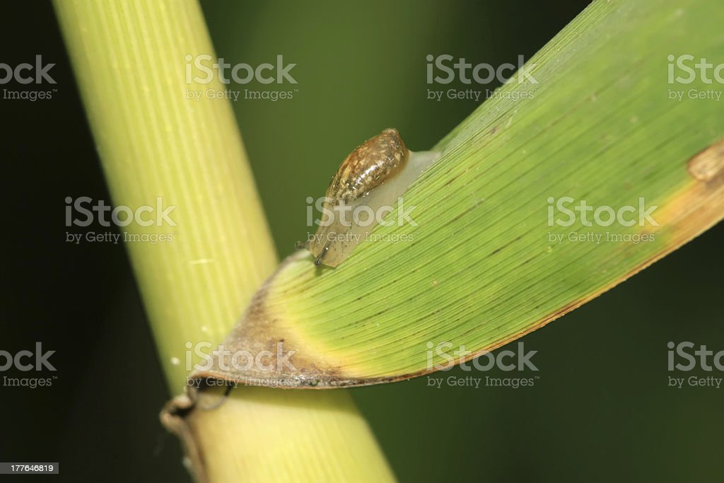 snails on the plants royalty-free stock photo