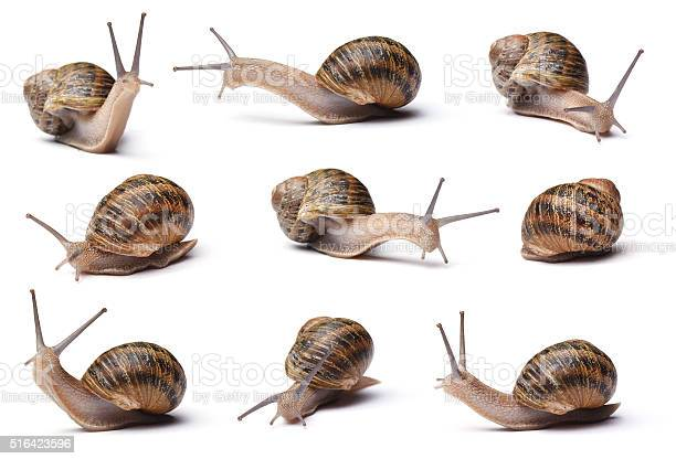 Snails picture id516423596?b=1&k=6&m=516423596&s=612x612&h=pinh7q f2xjb9fxu0nhiak9qlnsvaqd6nnnhdu2kty8=