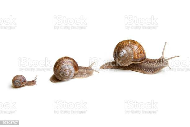 Snails picture id97608707?b=1&k=6&m=97608707&s=612x612&h=br shcktfk9x1ymlfclx6gerqnbodrq dyefjhv6z8q=