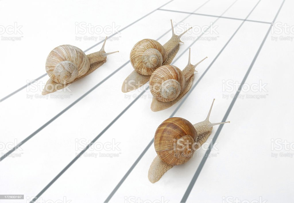 Snails race royalty-free stock photo