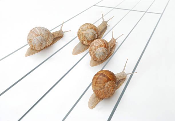 ślimaki wyścigu - ślimak gastropoda zdjęcia i obrazy z banku zdjęć