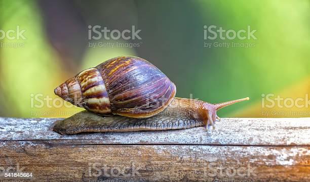 Snails reaching a stick foraging picture id541845664?b=1&k=6&m=541845664&s=612x612&h=oyywpy8vbquvdajcuh6xw jsnqc0mx 4vnc911reig8=