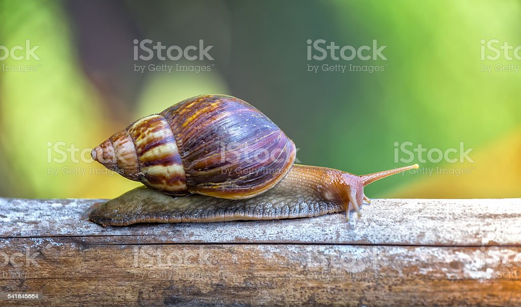 Snails reaching a stick foraging stock photo