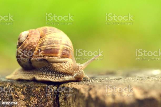 Snails reaching a stick foraging picture id679501744?b=1&k=6&m=679501744&s=612x612&h=eicwqm26zr8jayzrmhhnmoeutj1kndk73lbxxkmjcek=