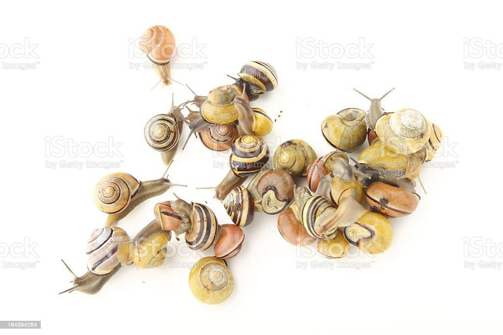 Snails XXXL royalty-free stock photo
