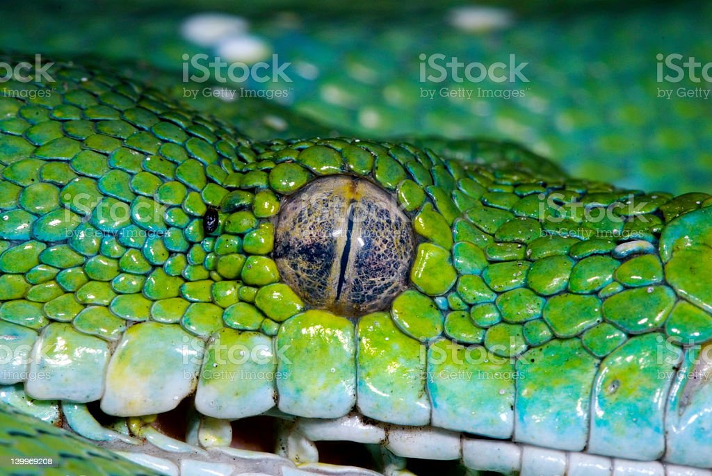 snake 12 royalty-free stock photo