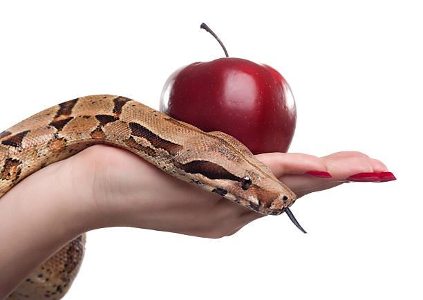 Snake und apple – Foto