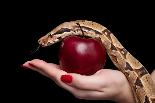 Female holding red apple and snake, photographed over black background. [url=file_closeup.php?id=16113715][img]file_thumbview_approve.php?size=1&id=16113715[/img][/url] [url=file_closeup.php?id=16113724][img]file_thumbview_approve.php?size=1&id=16113724[/img][/url] [url=file_closeup.php?id=16113820][img]file_thumbview_approve.php?size=1&id=16113820[/img][/url] [url=file_closeup.php?id=16113829][img]file_thumbview_approve.php?size=1&id=16113829[/img][/url] [url=file_closeup.php?id=15954311][img]file_thumbview_approve.php?size=1&id=15954311[/img][/url] [url=file_closeup.php?id=15947667][img]file_thumbview_approve.php?size=1&id=15947667[/img][/url] [url=file_closeup.php?id=13030113][img]file_thumbview_approve.php?size=1&id=13030113[/img][/url] [url=file_closeup.php?id=16216331][img]file_thumbview_approve.php?size=1&id=16216331[/img][/url] [url=file_closeup.php?id=16236289][img]file_thumbview_approve.php?size=1&id=16236289[/img][/url] [url=file_closeup.php?id=16236293][img]file_thumbview_approve.php?size=1&id=16236293[/img][/url]