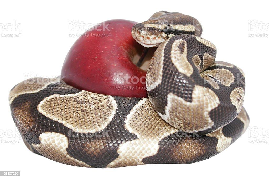 Serpiente y manzana - foto de stock