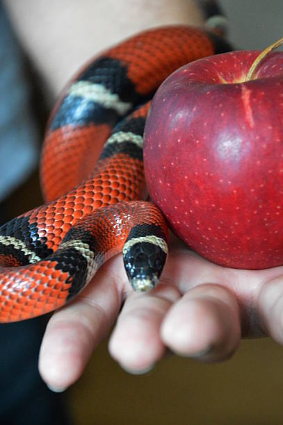 snake and forbidden fruit - debauch stock pictures, royalty-free photos & images