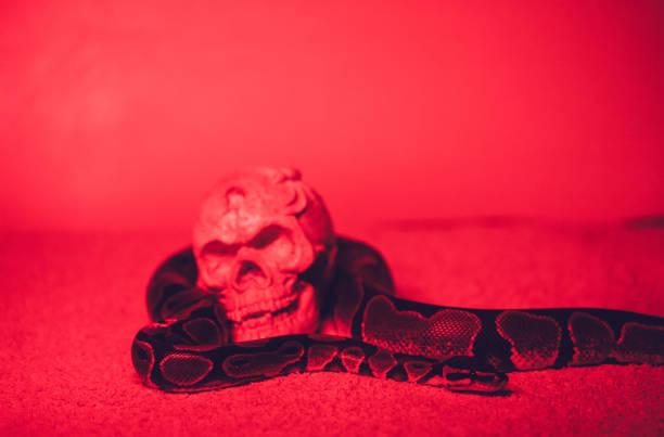 snake and human skull - seitas imagens e fotografias de stock
