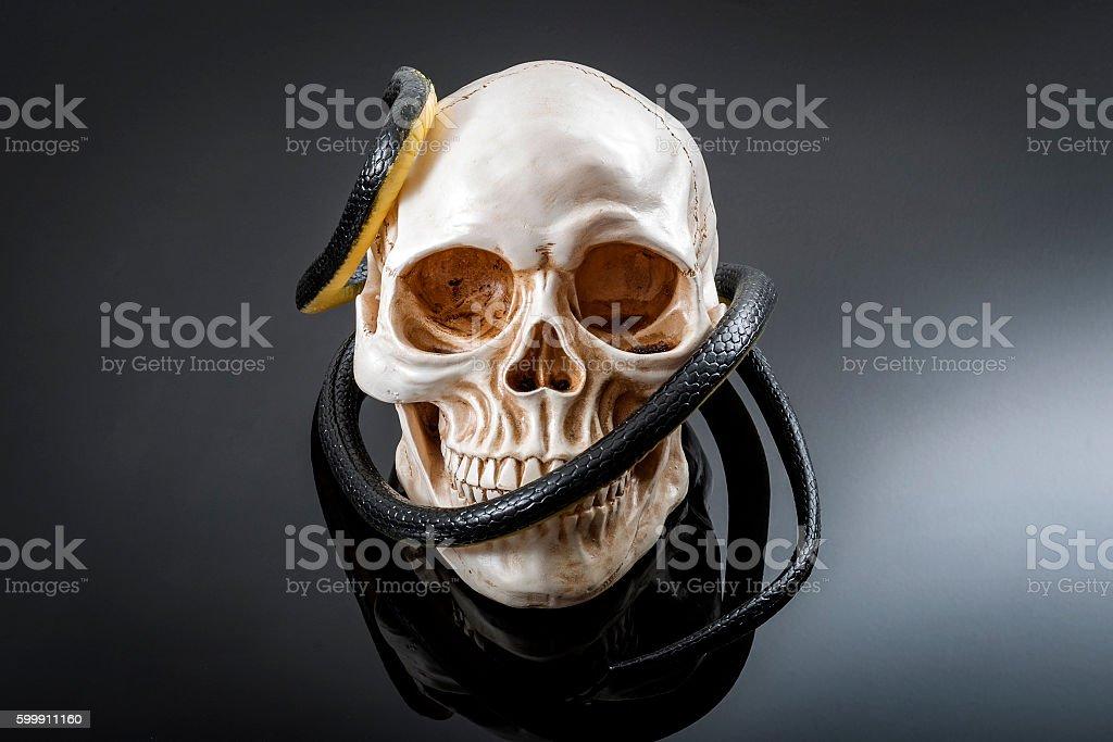 Snake ans skull stock photo