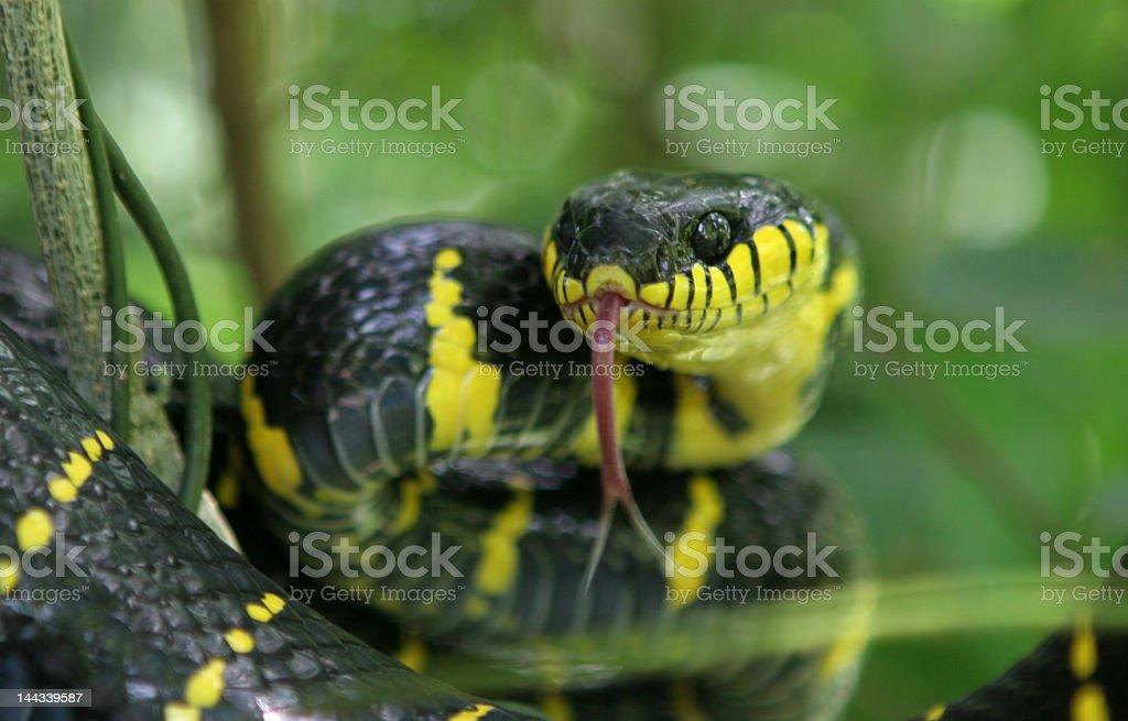 Snake attack stock photo