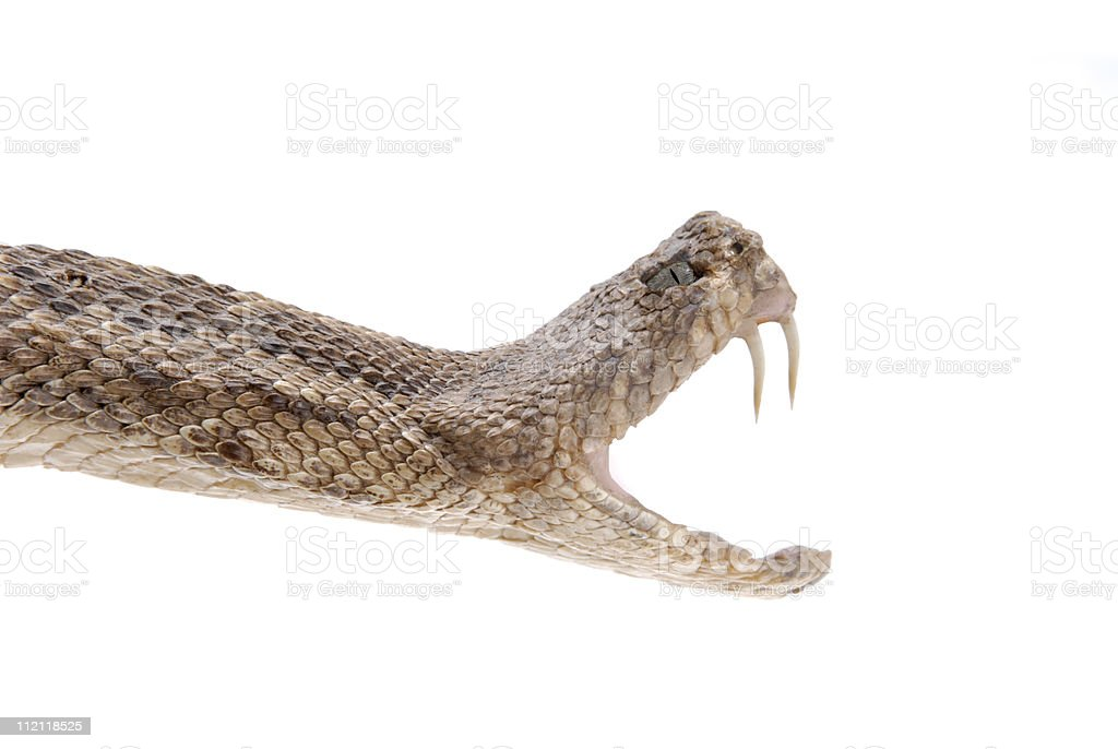 Snake Bite stock photo