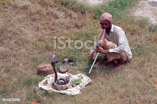 Indore, Madhya Pradesh, India, 1976. An Indian snake charmer sits on a meadow in front of a basket in which a cobra slowly emerges. The Cobra moves rhythmically with the swing of the flute of the charmer. For tourists always a nice photo motive.